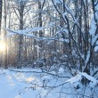 Stock Photo: Winter landscape
