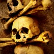 Skulls and bones — Stock Photo