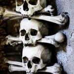 Skulls and bones — Stock Photo #1191559