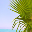 Palm leaves and sea — Stock Photo