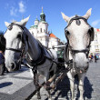Carriage and pair - Foto Stock