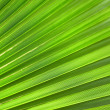 Royalty-Free Stock Photo: Palm leaf
