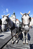 Carriage and pair — Stock Photo