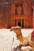 Treasury temple at Petra — Foto de Stock
