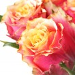 Roses — Stock Photo #1424772