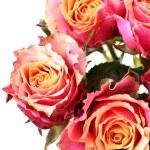 Roses — Stock Photo #1424880