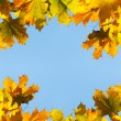 Maple leaves frame — Stock Photo