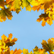 Maple leaves frame — Stock Photo #1427298