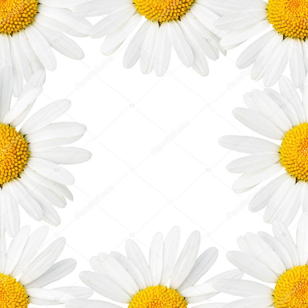雏菊边框 — 图库照片08zoooom#1425651