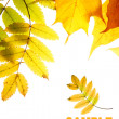 Autumn leaves — Stockfoto