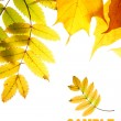 Autumn leaves — Stock Photo #1431847