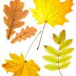 Dry autumn leaves — Stock Photo