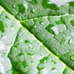 Wet green leaf macro — Stock Photo