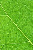 Macro folha verde — Fotografia Stock