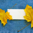 Blank calling card and maple leaves — Stok fotoğraf
