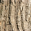 Bark of oak close-up - Stock Photo