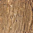 Oak bark — Stock Photo