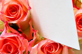 Pink roses with blank visiting card — Stock Photo