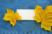 Boş arama kartı ve akçaağaç yaprağı — Stok fotoğraf