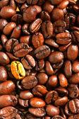 Golden coffee bean — Stock Photo