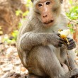 monkey with banana — Stock Photo
