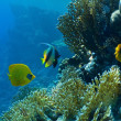 Stockfoto: Coral and fish