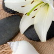 Madonna lily spa stones and sea shell - Stock Photo