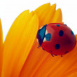 Stock Photo: Ladybug on yellow flower