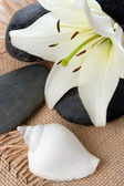 Madonna lily spa stones and sea shell — Stock Photo