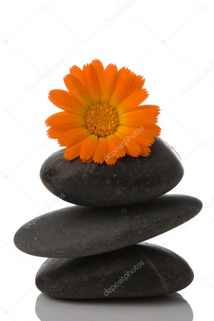 Spa stone and orange flower on white background — Stock Photo #1209071