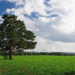 Landscape  tree on the field under blue - Stock Photo