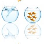 Goldfish leaping in aquarium — Stock Photo