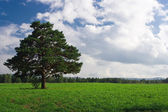 Landscape tree on the field under blue — Stock Photo