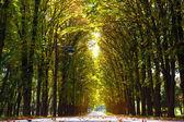 Aleja park jesienią — Zdjęcie stockowe