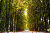 Parc de la ruelle à l'automne — Photo