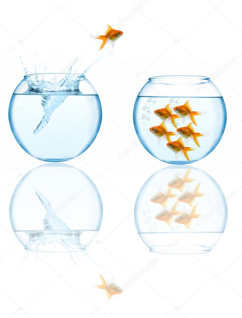 Goldfish leaping in aquarium on white background — ストック写真 #1212698