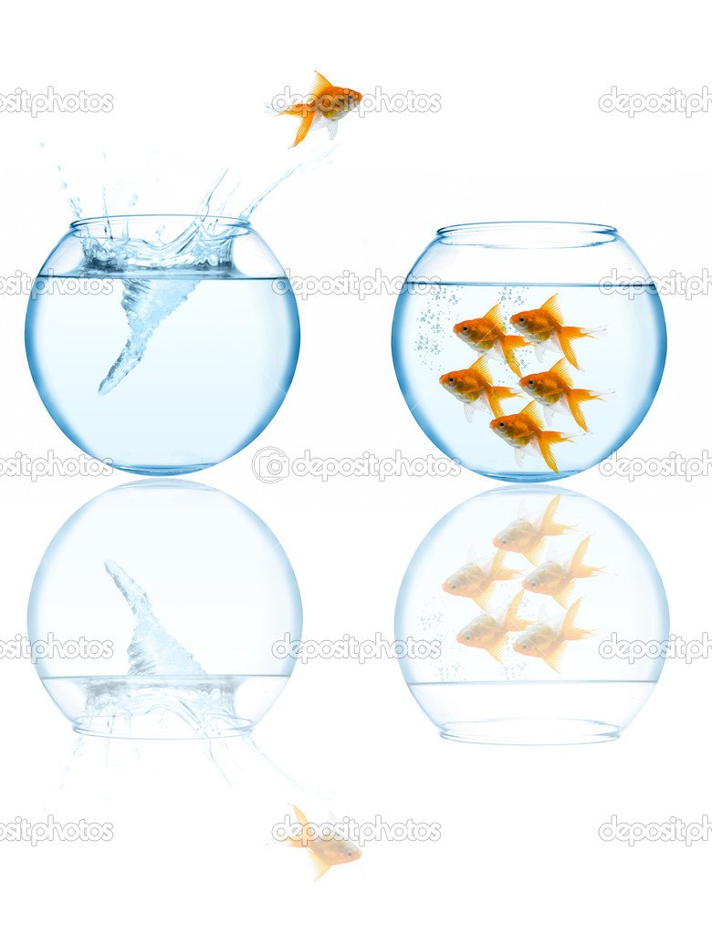 Goldfish leaping in aquarium on white background — Photo #1212698