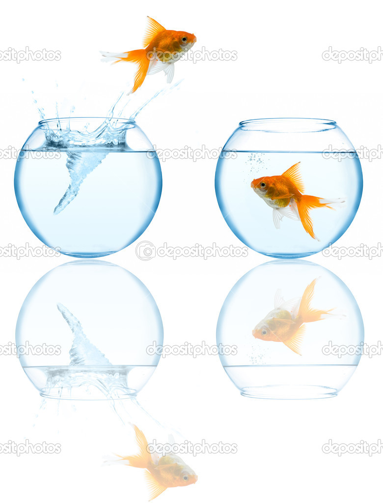 Goldfish leaping in aquarium on white background  Stock Photo #1212889