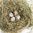 Royalty-Free Stock Photo: Quail eggs in a nest