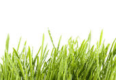 Isolated grass — Stock Photo