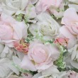 Background of white roses - Foto Stock