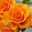 Orange rose in drops of dew — Stock Photo #1445413