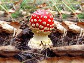 Mushroom — Stock Photo
