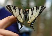 Motýl 2 — Stock fotografie