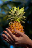 Pineapple on the tropical background — Stock Photo