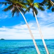 Coconut palms on sand beach in tropic — Stock Photo #1286853
