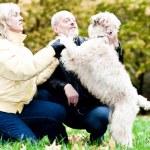 Family embrace irish soft coated wheaten — Stock Photo