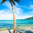 Coconut palm on sand beach in tropic - Stock Photo