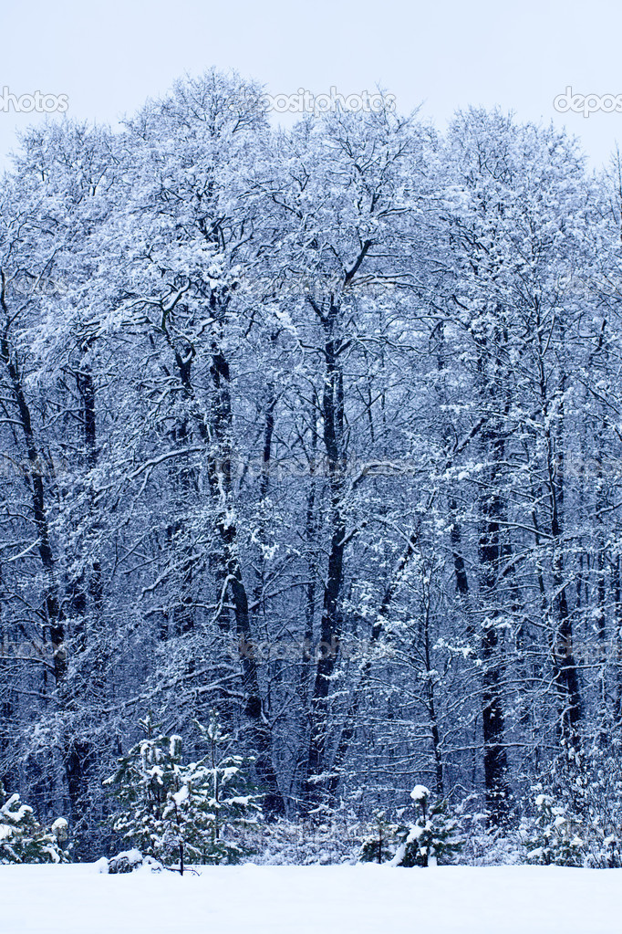 Winter landscape with trees in frosty day — Stock Photo #1319626