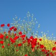 Royalty-Free Stock Photo: Poppies and sky 4